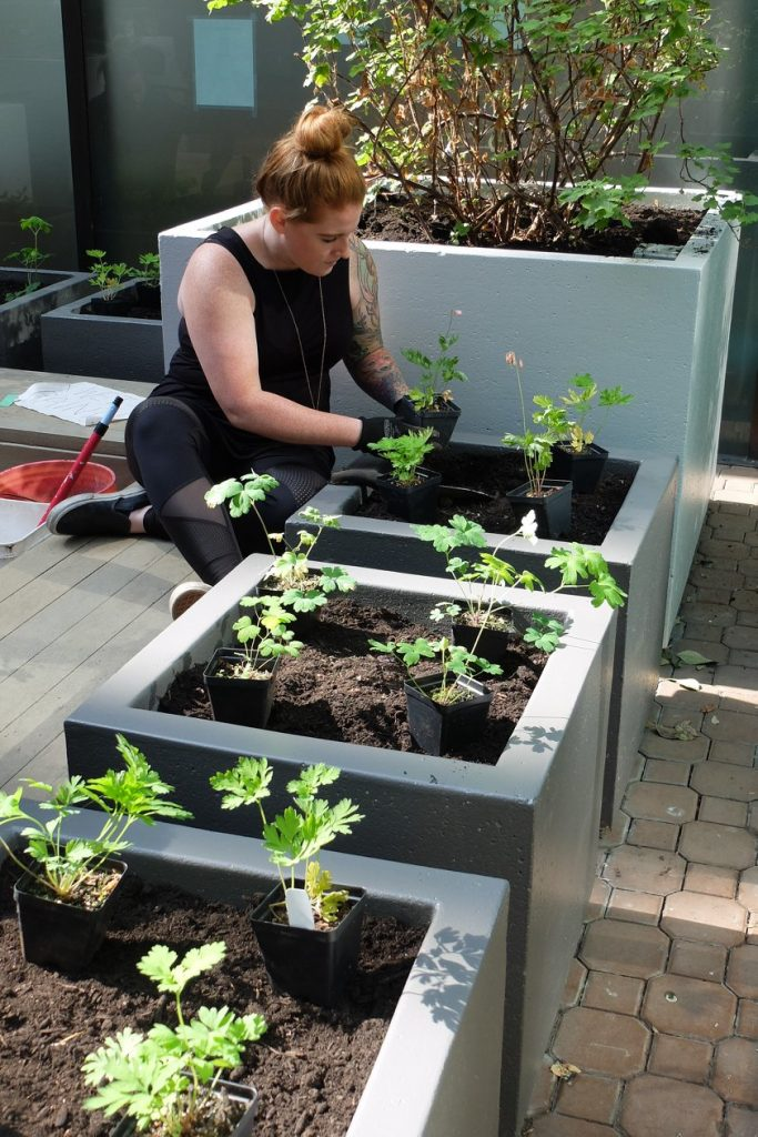 A woman plants a seedling in a raised bed on a sunny day.
